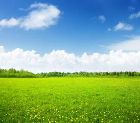 Keuken foto achterwand Lime groen field of spring flowers and perfect sky