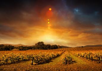 Fototapete - Autumn Vineyard Sunset