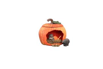 Freisteller Kürbishaus mit Mäusen