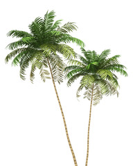 two Areca palm trees isolated on white background