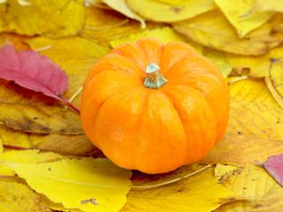 かぼちゃと紅葉した葉