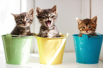 Wall Mural - Funny kittens
