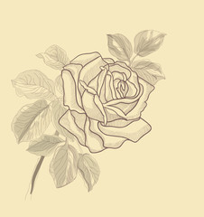 Hand drawing vector rose card