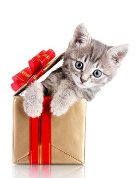 Funny kitten in golden gift box isolated on white