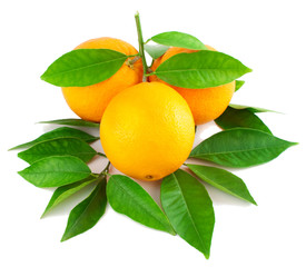 Oranges on a branch with leaves