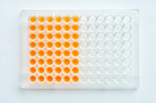 96 wells plate with orange solution