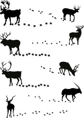 deers and its tracks isolated on white