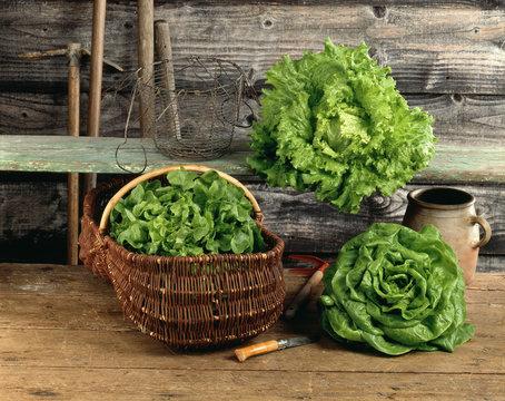 Composition de salades