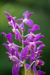 Paradise butterflies. Orchids of Borneo.
