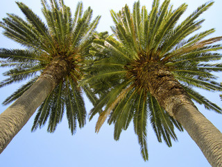 bottom view on palm trees