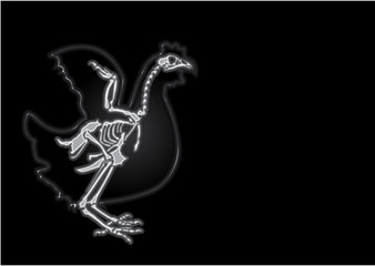 x-ray chicken