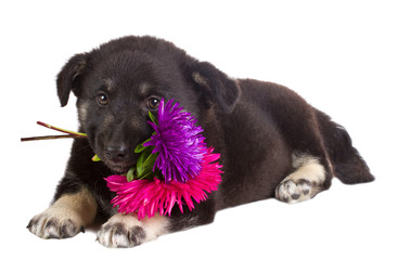 puppy hold flowers