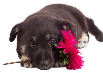 puppy holding flower