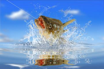 Fische 153