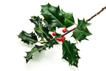Holly twig