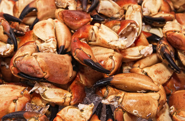 Claws of a huge crab. The fish market. Bergen. Norway.