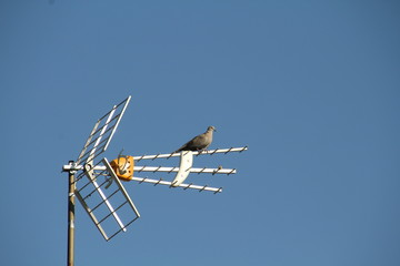 TV antenna with a dove