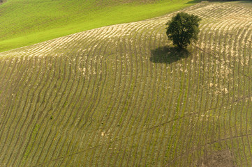 Landscape in Emilia-Romagna (Italy) at summer, lonely tree