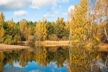 Autumn landscape at wood lake