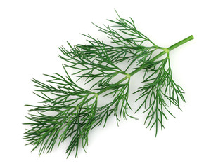 Twig of dill