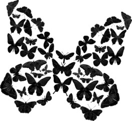 black complicated butterfly on white