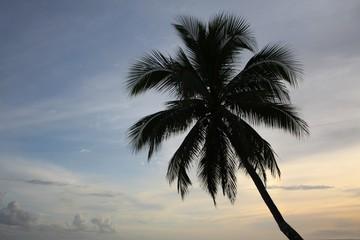 Single palm tree at sunset