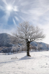 isolated icy tree in the frozen meadow