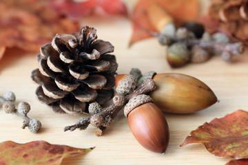 pine cone and acorns