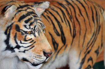 Tiger © michael_0822