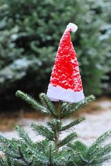 Weihnachtsmütze auf Tanne