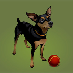 The small dog with red ball