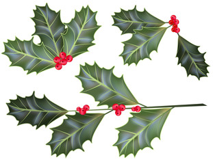 Vector holly leaves and berries