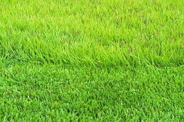 border trimmed and overgrown grass