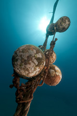 Mooring rope and sun in the Red Sea.