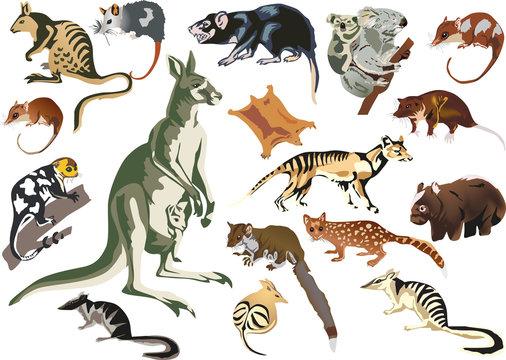 set of marsupial animals isolated on white