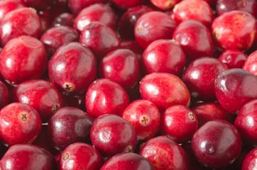 Preiselbeere, Cranberry
