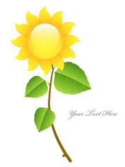 Beautiful Glossy Vector Sunflower