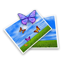 Photos with butterflies illustration