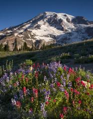 Mt. Rainier and Wildflowers in Bloom