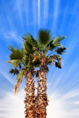 palm in summer under cool sky