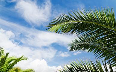 Blue sky with palm trees