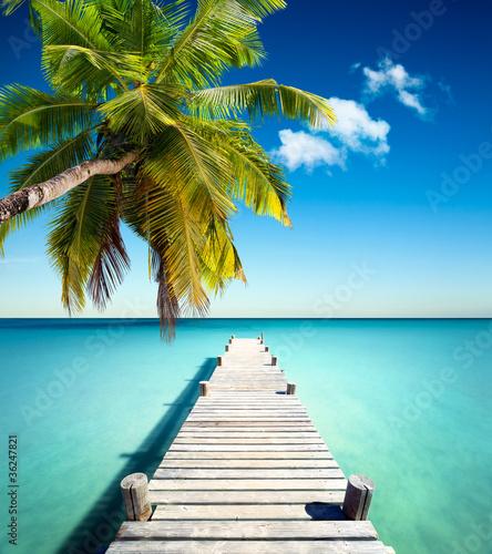 Plage vacances cocotier photo libre de droits sur la - Palmier cocotier ...
