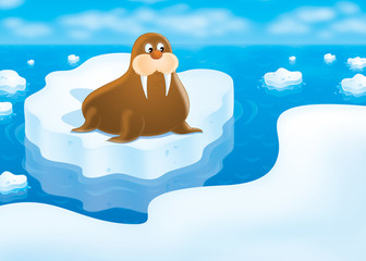 walrus lying on the drifting ice floe