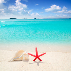 Starfish and seashell in tropical beach