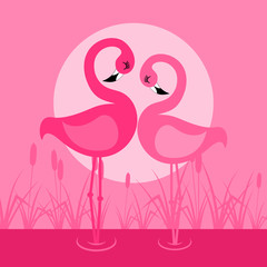 Love of a flamingo on lake. A vector illustration