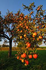 apple's at appletree