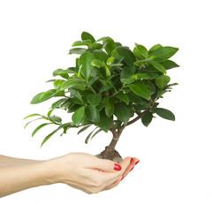 Woman holding a Bonzai tree