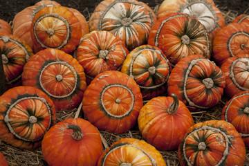 Selection of Turks Head Pumpkins