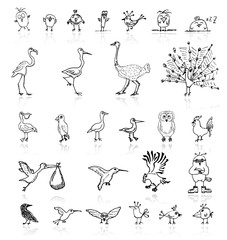 Sketch of funny birds for your design