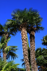 palm with blue sky